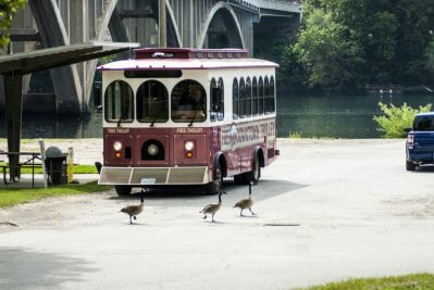 Catch the FREE trolley from our RV Park to Historic Downtown Branson and the Branson Landing.